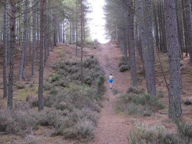 Culbin Forest run