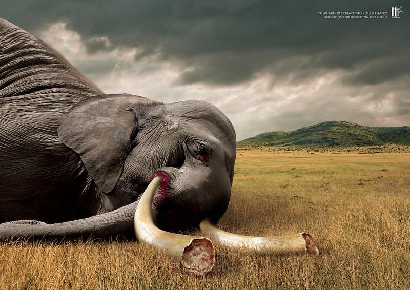 Wildlife-Friend-Foundation-Thailand-Tusks