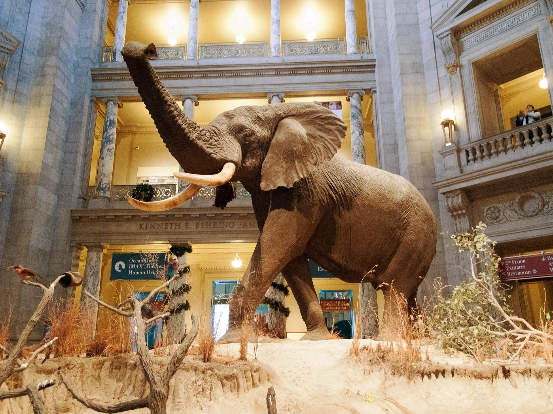 Imax Movies At Museum Of Natural History