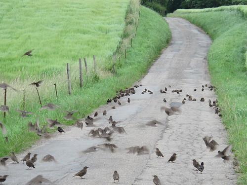 Selv på en gråvejrsdag kan det være dejligt lunt at ligge på et stykke asfalt... - Risager