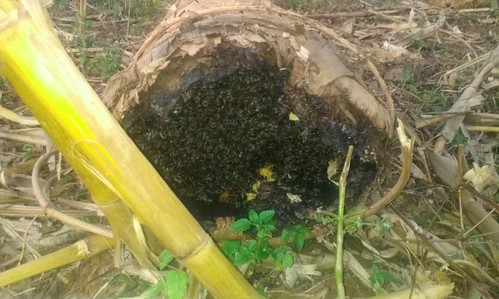 burned beehive in Dedo district, Jimma (Photo: ILRI\Ephrem  Tesema)