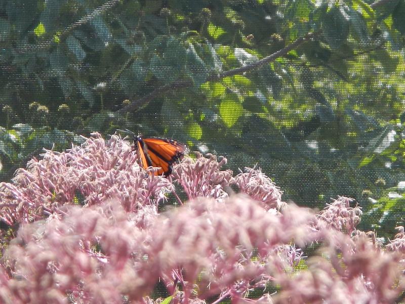 2013 Butterfly Festival