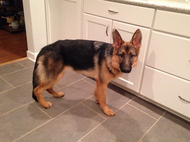 Eden standing, 6 months old