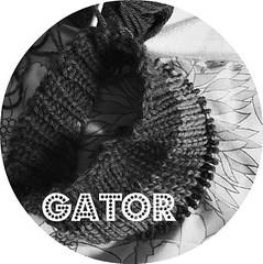 gator knitting pattern