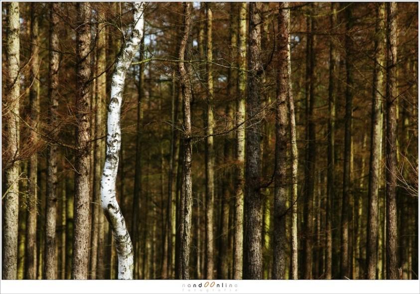 Telelens-landschappen voor bomen en bos