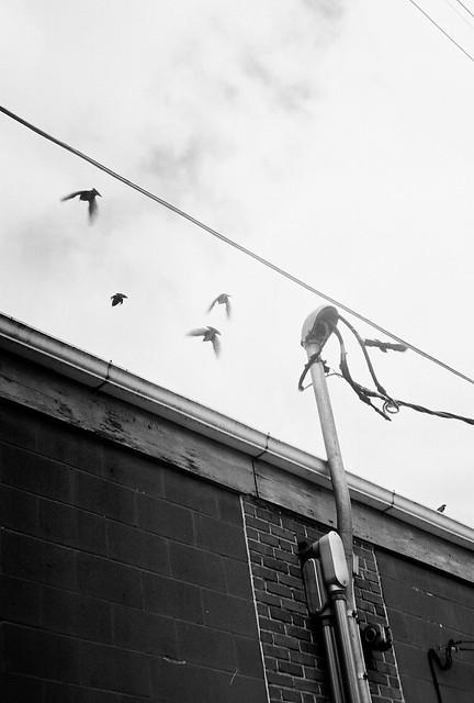 Birds in flight gallery32 etsy
