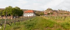 Hoflössnitz