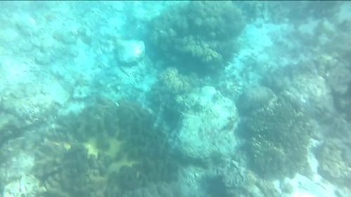 Corales en el mar alrededor de la isla de APO