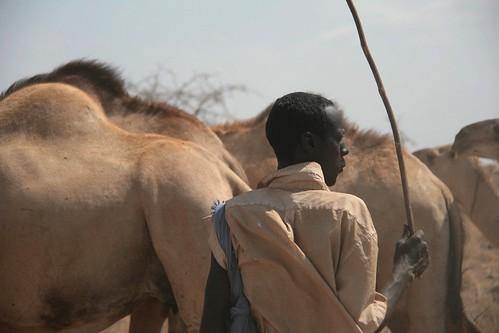 Kenya Isiolo, Merti (Bassa, Bulesa)