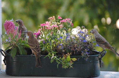birds and flowers (3/6)