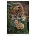 Shelf Fungus, Autumn