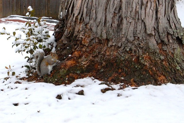 Squirrel, tree, snow… #FamiliaLubriderm