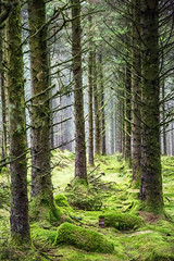 Image from Bryn Arau Duon - a managed forest in Wales - here the planning horizon is well beyond ten years at a time...