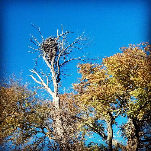 View While Nursing for November 3, 2013 - Bald Eagle Nest at Occoquan Bay National Wildlife Refuge  http://viewswhilenursing.tumblr.com