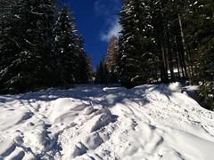 Aufstieg Gornerberg Richtung Almen