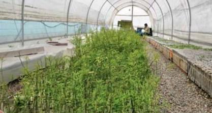 Máquina trilladora de frutos de algarrobo para el Programa de Forestación.
