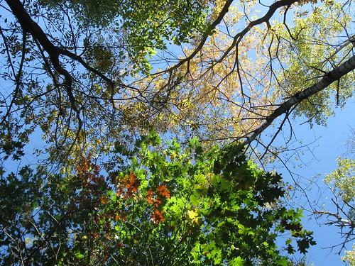Lodi Marsh State Natural Area, 10/13/13