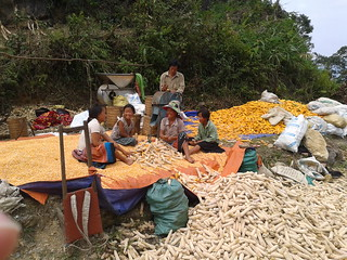 A family of Hmong farmers thresh their maize harvest in rural Northwest Vietnam