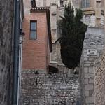 Burgos 16