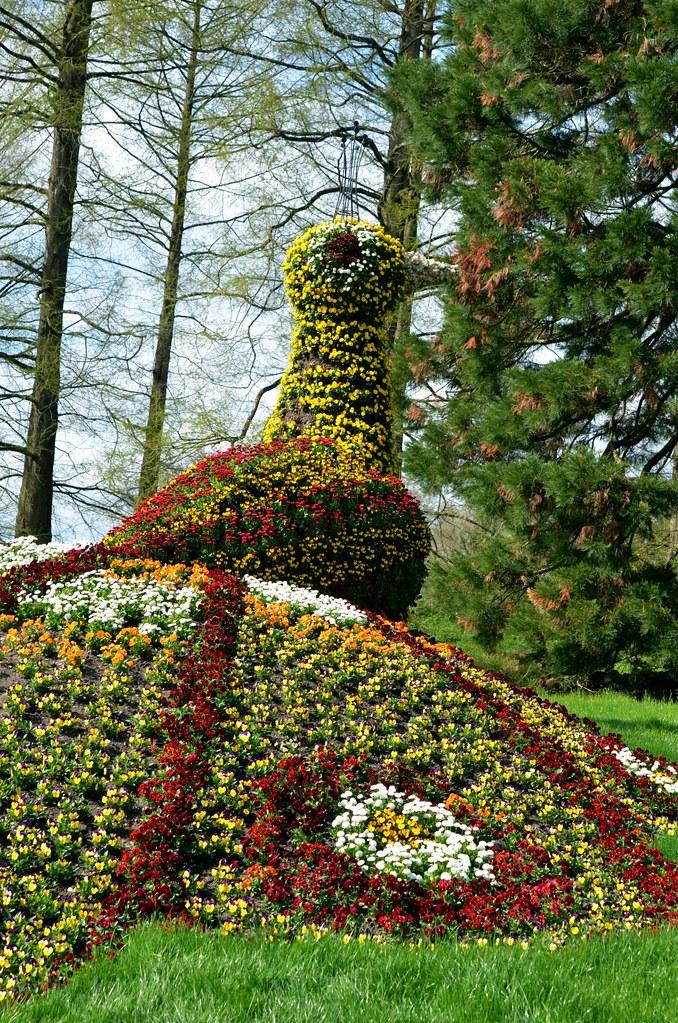 flower peacock in switzerland