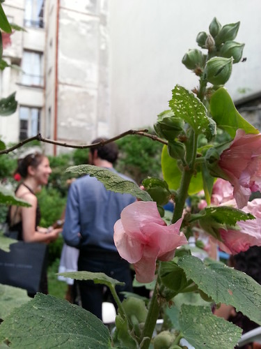 Garden Party - rose view