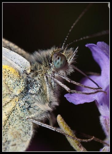 Butterfly by jonny.andrews65