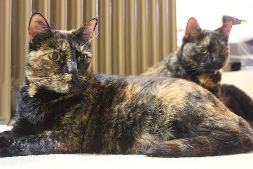 Licorice and Saffron loving the heater