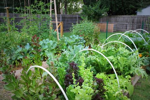 20130622. The garden.