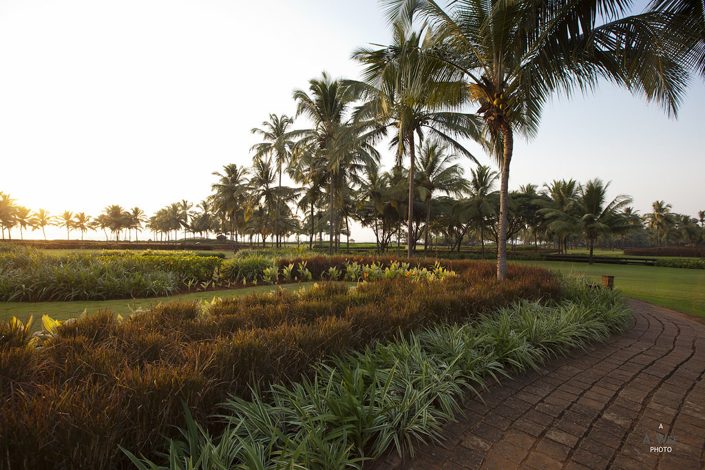 Sunset at the Palm Grove