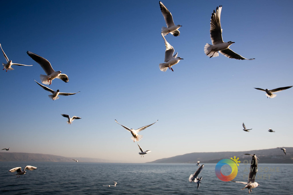 Day 3- Sea of Galilee Boat Ride - Our Awesome Planet-85.jpg