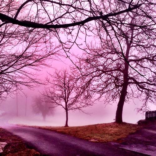 Sunrise in the fog by SpatzMe