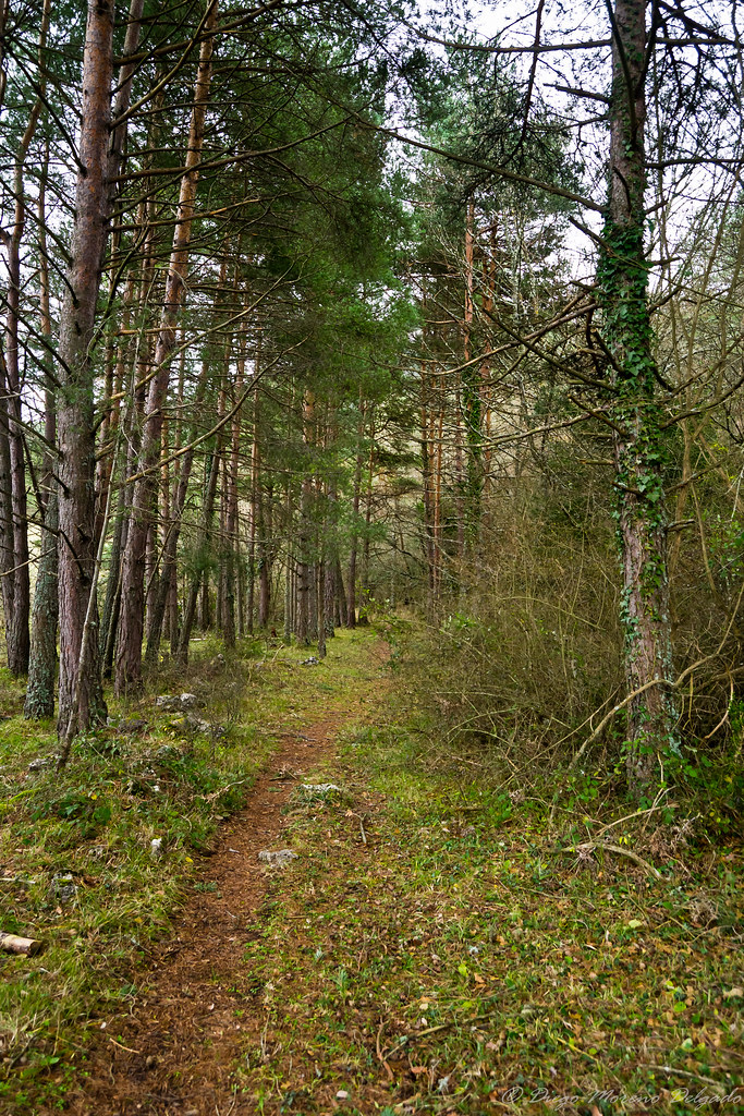 Camino entre los árboles - Path through the trees