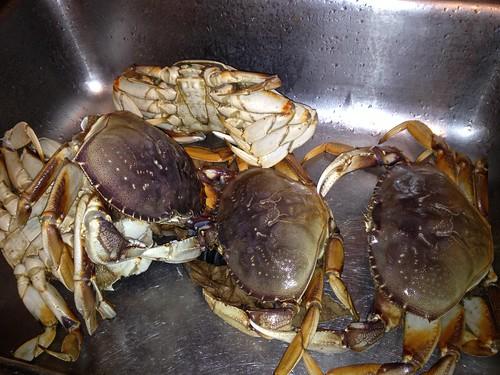 Crabsgiving