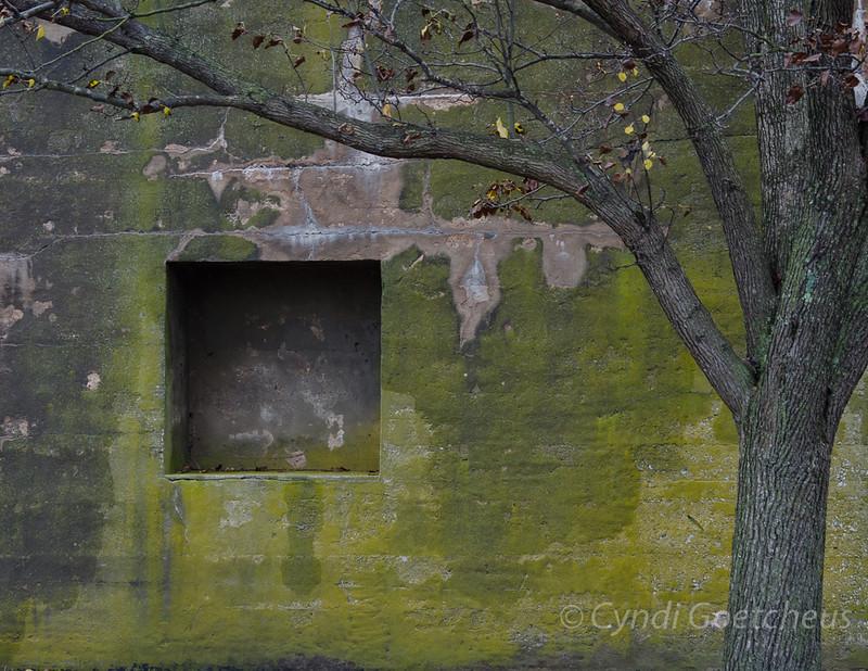 green wall wabi sabi