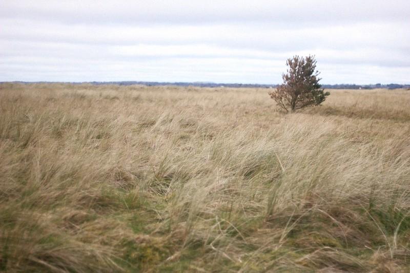 bird reserve curracloe