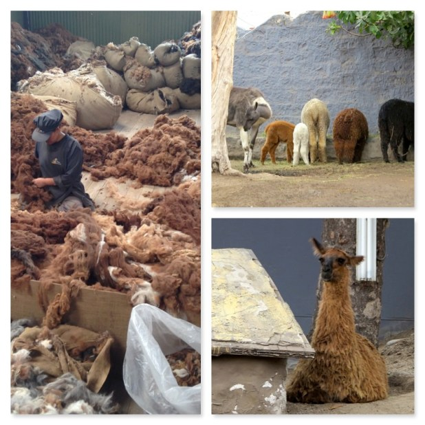 Animales Peru