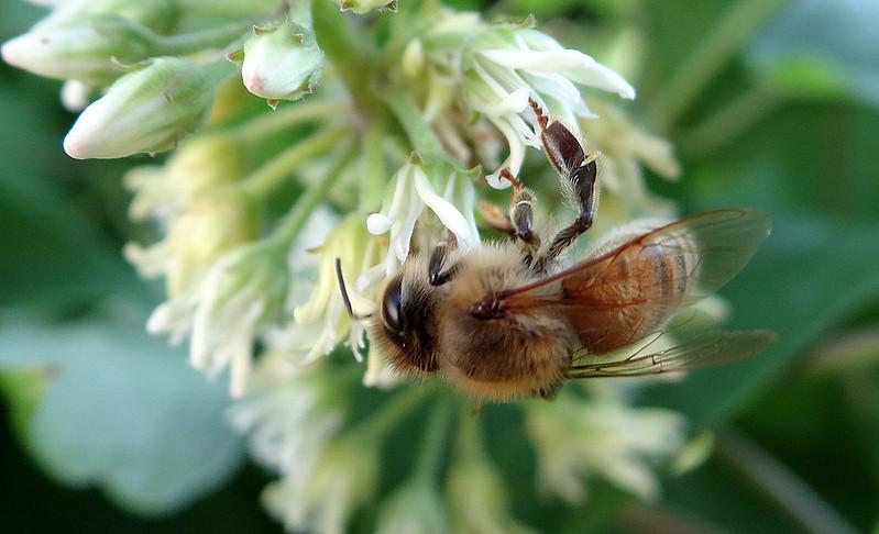 DSC03595 bee stl 190713