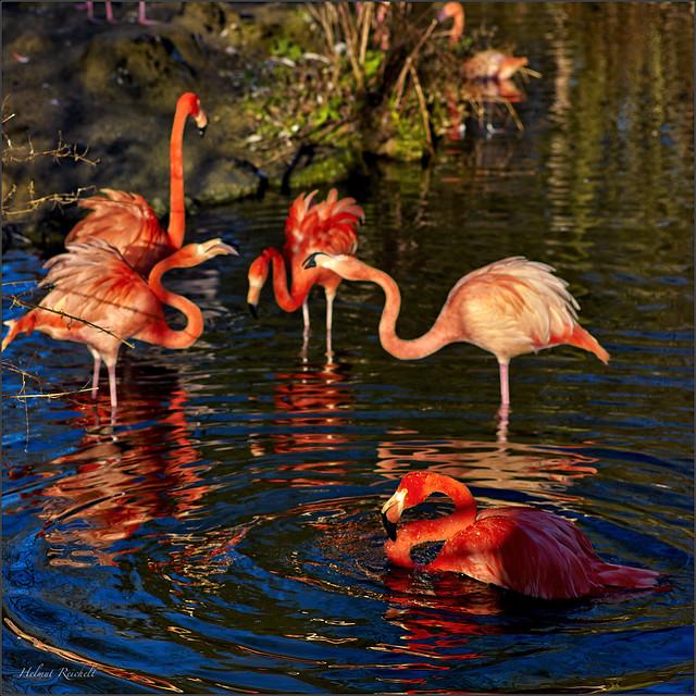Flamingo-Rot