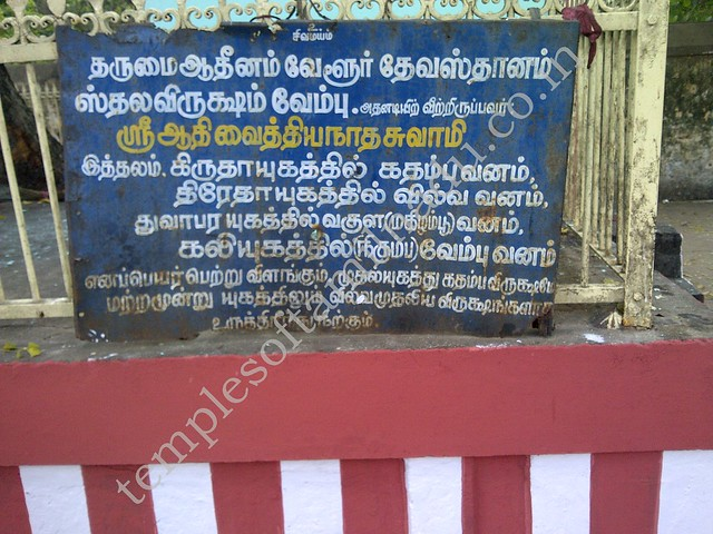 About the Sthala Vruksham, Vaitheeswaran Kovil