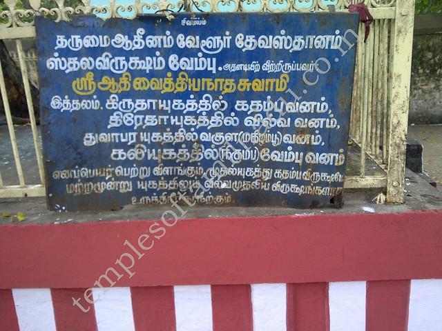 About the Sthala Vruksham, Vaitheeswaran Kovil