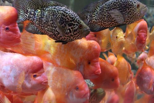 Dubai Aquarium and Underwater Park
