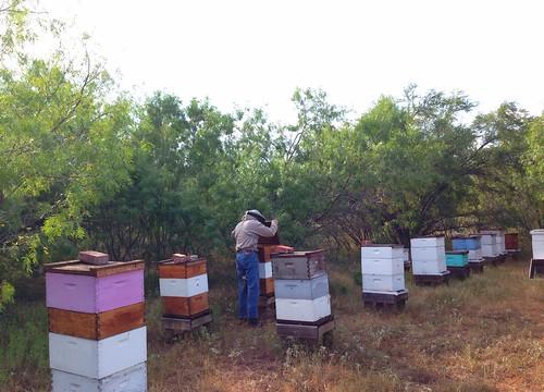 Big Oaks bee Yard  July 10, 2013
