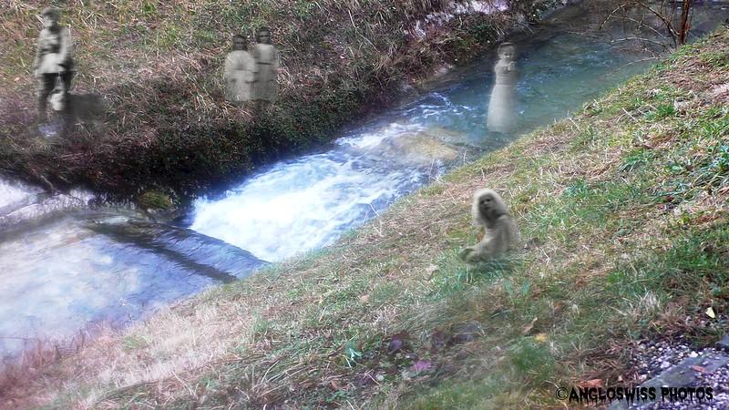Stream in local cemetery, Solothurn
