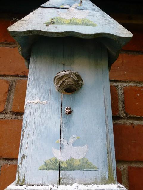 Dead wasps nest!