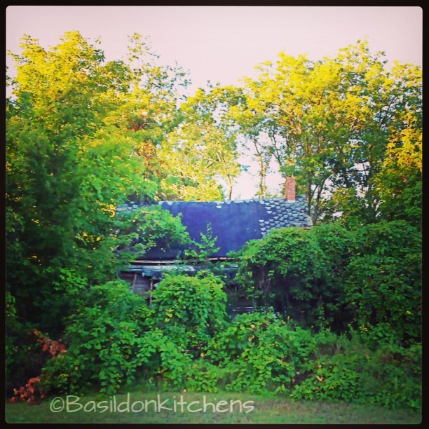 Sep 5 - here forever {this house has been 'here forever' though seems to have been forgotten} #fmsphotoaday #rural #decay #overgrown #princeedwardcounty #fallingdown