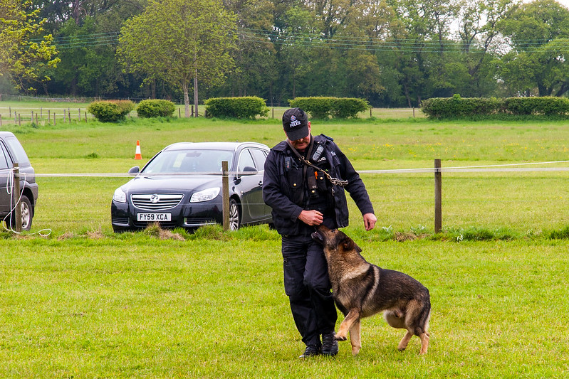 Police Dog demonstraion
