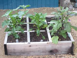 zucchini, crookneck squash, peppers, eggplant