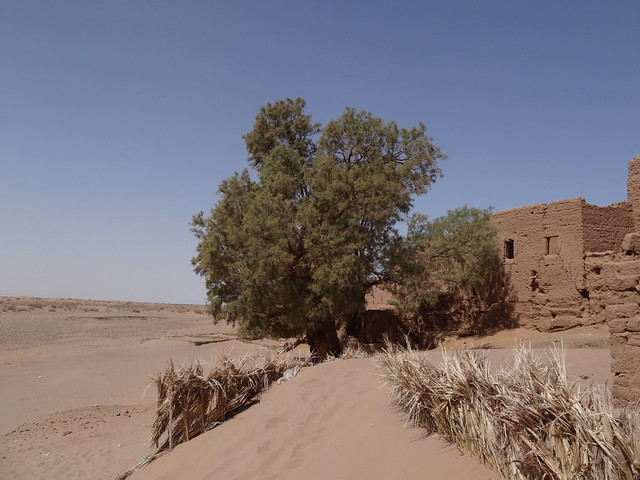 On the edge of the Sahara