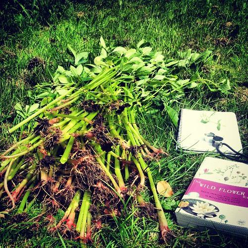 Survey day 1. The Carrs. Himalayan Balsam. Grassland.