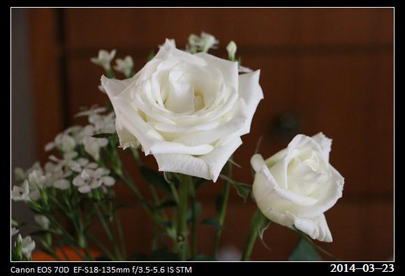1_20140323_Rose1